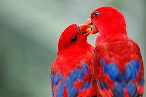 Best & Colourful Birds Wallpapers ~ Free HD Desktop ...