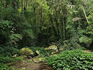 What Is A Rainforest  Layers And Types Of Rainforests