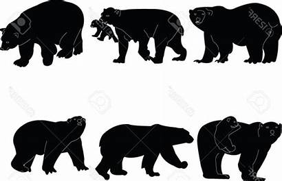 Bear Silhouette Grizzly Clipartmag