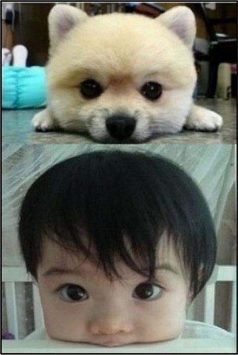Funny Pictures, Cute Animals  Dump A Day