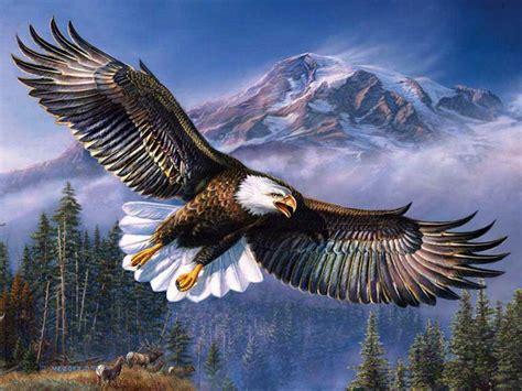 beautiful background bald eagle  flight wings spread hd
