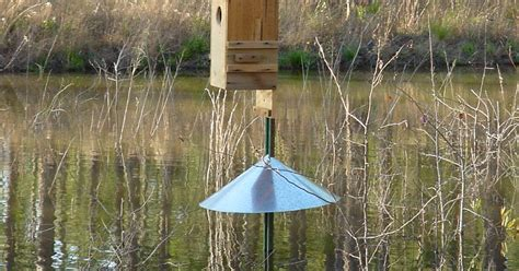 building nice wood ideas wood duck box predator guard plans