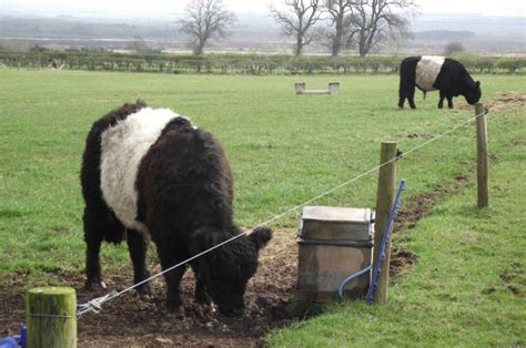 Different Types Of Electric Fence Wire For Livestock