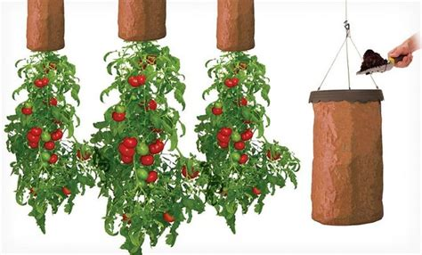 vertical vegetable garden planters grow tomatoes upside down in greenhouse from ceiling gardening pinterest vertical