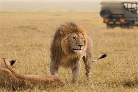 Kenya or Tanzania: Which wilderness safari should you choose?