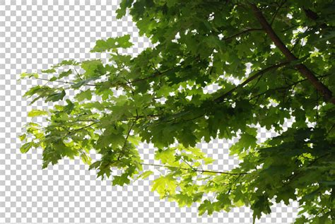 green and white tiles trees0045 free background texture leaves alpha masked