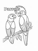 Parrot Coloring Pages Parrots Printable Realistic Pirate Animals Getcolorings Birds Pag sketch template