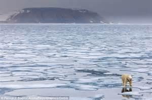 Bear Global Warming Polar Ice Cap