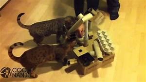 Katzenspielzeug Selber Machen Karton : fummelbett f r katzen selbst basteln katzenspielzeug selber machen youtube ~ Frokenaadalensverden.com Haus und Dekorationen