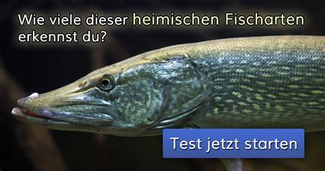Wie Viele Dieser Heimischen Fischarten Erkennst Du?