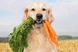 Nudeln Für Hunde : was d rfen hunde essen hundefutter selbst zubereiten ~ Watch28wear.com Haus und Dekorationen