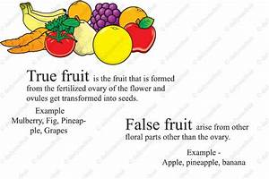 What Are True Fruits And False Fruits