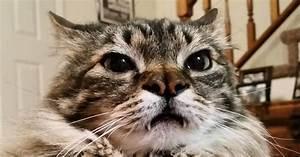 Tiere Suchen Ein Zuhause Instagram : verr ckte fakten ber katzen ~ Watch28wear.com Haus und Dekorationen