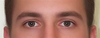 Eyebrows Eyebrow Ffs Animation Edge Thesis Height