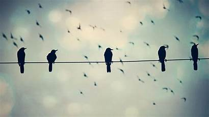Wire Birds Phone Funny Crows Wild Wallpapers