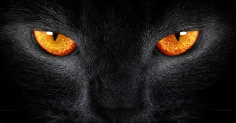 cats evil bad luck why orange eyes