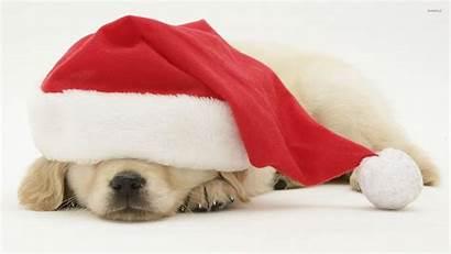 Hat Puppy Sleeping Santa Under Dog Animals
