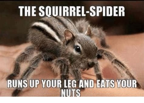 Squirrel Nuts Meme - 25 best memes about squirrel spider squirrel spider memes