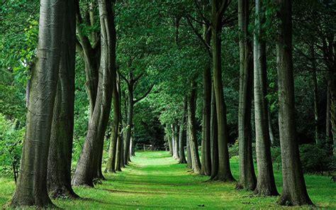Background Images Of Trees by H 225 Tt 233 Rk 233 Pek Erdők F 225 K Erdei T 225 Jak Aniel Wallpapers