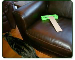 how to keep cats away from furniture keep cats furniture countertops and tables
