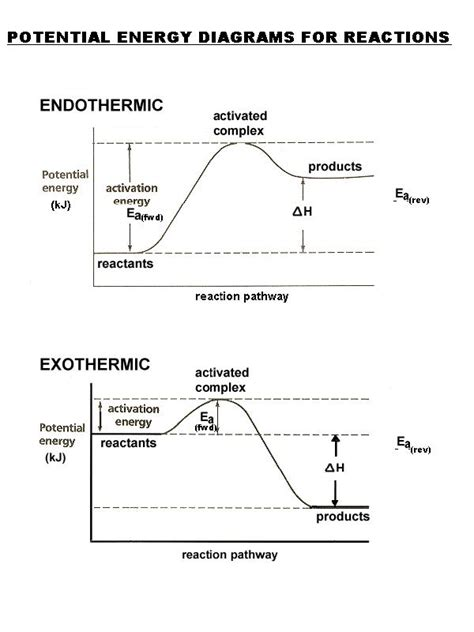 Potential Energy Diagram Worksheet Worksheets For All  Download And Share Worksheets  Free On