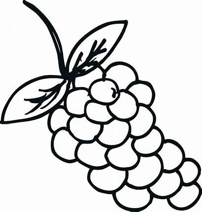 Grapes Coloring Pages Grape Printable Template Children