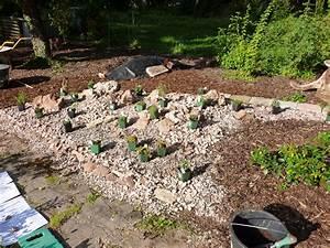 Pflanzen Für Steingarten : pflanzen f r den steingarten bg naturgarten ~ Michelbontemps.com Haus und Dekorationen