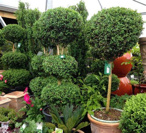 Topiaries  Amber Garden Centre