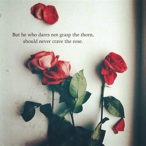 rose quotes positive quotes flowers beautiful