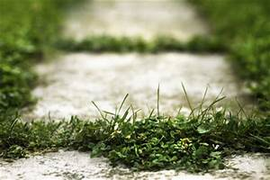 Unkraut Auf Gehwegen Dauerhaft Entfernen : unkraut dauerhaft vernichten die besten tipps ~ Michelbontemps.com Haus und Dekorationen