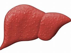 The Liver  Structure  Function  And Disease