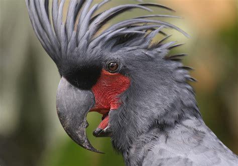 bali  bali bird park