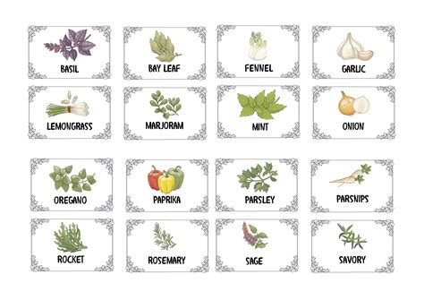 herbs spices illustrated plain labels graphic