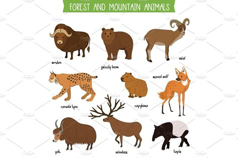 forest  mountain animals isolated vector set