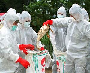 Bird Flu Virus Remains Infectious Up To 600 Days In