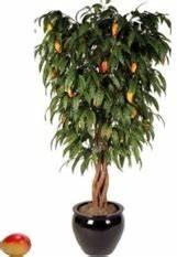 Faire Germer Des Graines De Poivrons : comment faire germer des noyaux et des p pins de fruits ~ Melissatoandfro.com Idées de Décoration