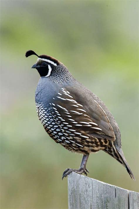golden gate audubon societywinners losers in oakland s