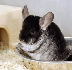 Tiere Suchen Ein Zuhause Instagram : tiere suchen ein neues zuhause bilder fotos welt ~ Watch28wear.com Haus und Dekorationen