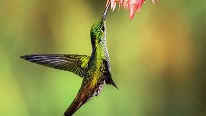 Bird Hummingbird Birds 5k Wallpapers