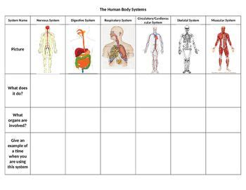 Human Body Systems Middle School Worksheets Worksheets For All  Download And Share Worksheets