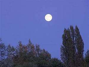 Jardiner Avec La Lune : jardiner avec la lune conseils jardinage ~ Farleysfitness.com Idées de Décoration