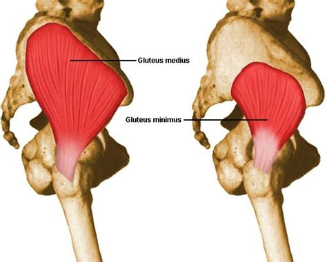 Assessing And Treating Dysfunction Of The Gluteus Medius