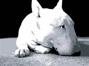 English Bull Terrier Art