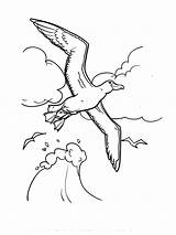 Albatross Coloring Pages Printable Birds Recommended sketch template
