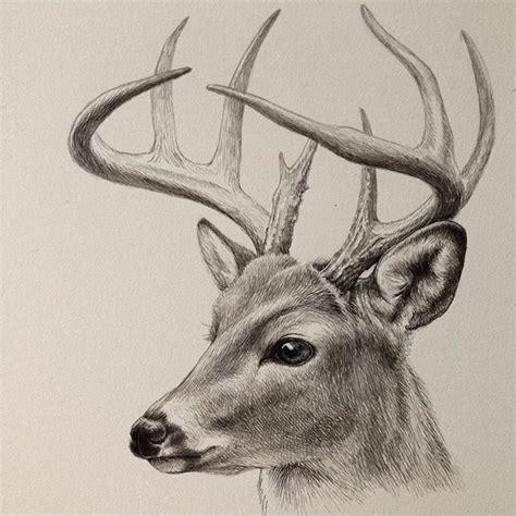 deer drawings    ink deer art drawing artwork