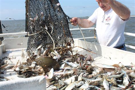 Shrimp Boat Macon Ga by Shrimp Boat Tour With Credle S Adventures This Is My South
