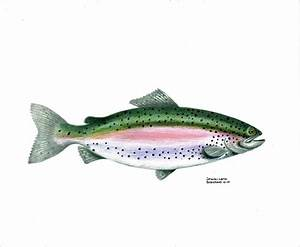 Wallace Brantley Sport Fishing Series Rainbow Trout ...