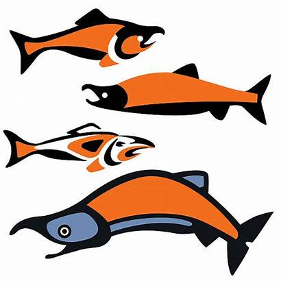 Salmon Pacific Northwest Illustrations Illustration Native Vector