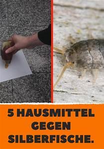 Hausmittel Gegen Moos : 5 hausmittel gegen silberfische haushaltstips silberfische fische und silber ~ A.2002-acura-tl-radio.info Haus und Dekorationen