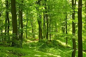 Verein Wald  Holz Eifel eV  Wirtschaft Eifel